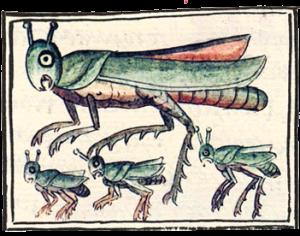 Chapulin Aztec