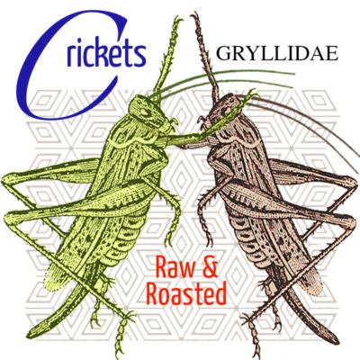 Crickets for Human Consumption