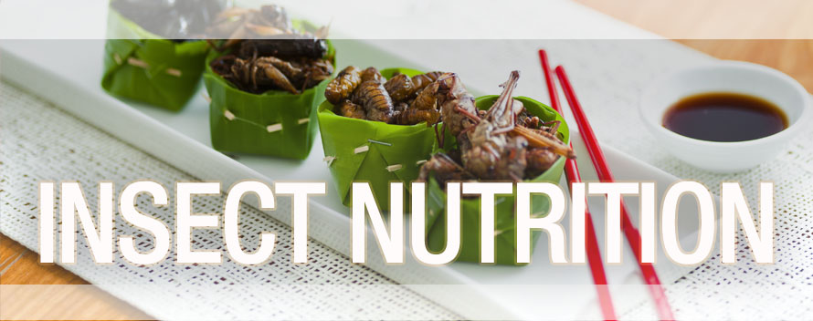 Insect Nutrition Header
